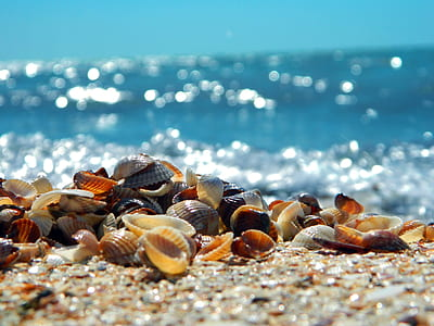 assorted-color seashells on sand at daytime
