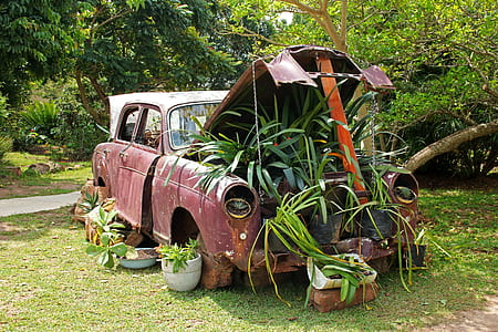 brown vehicle with plants