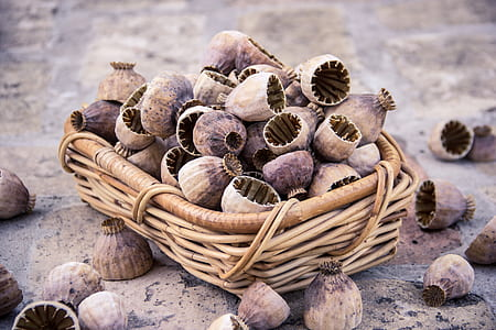 brown wicker basket with shells