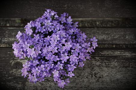 purple clustered flowers