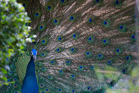 close up photo of peacock
