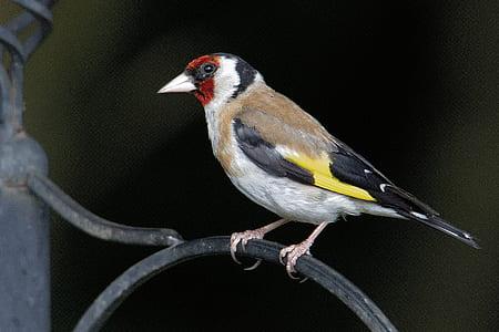 multicolored bird on metal rod