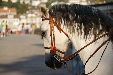 white horse with brown straps