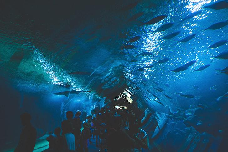 Under Aquarium Fish