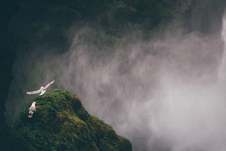 two grey and white gulls on mountain covered by fog
