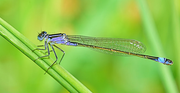 photo of blue dragonfly on grass