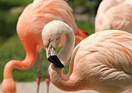selective focus photograph of flamingo