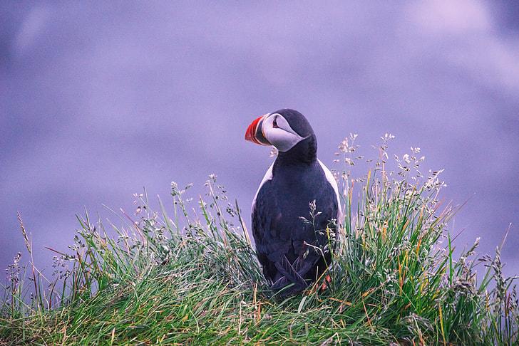 white and black bird on grass during daytime