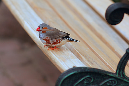 gray and brown bird on brown wooden bench