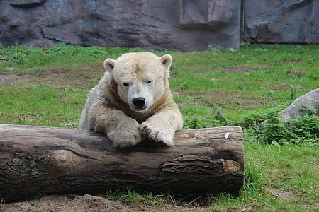 bear sitting near tree