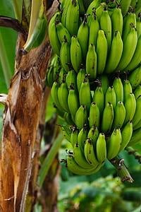 photo of green bananas
