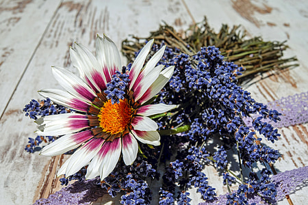 white and pink daisy and purple lavender flowers