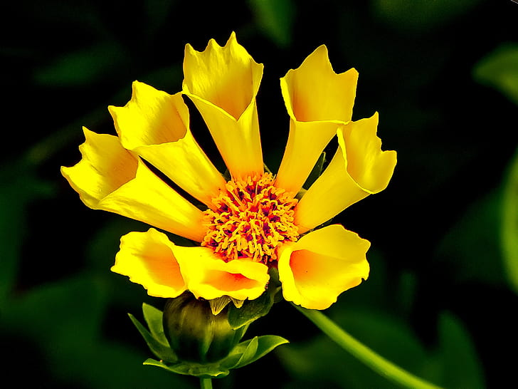 photography of shallow focus yellow flower