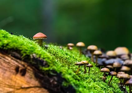 mushrooms on the green grass