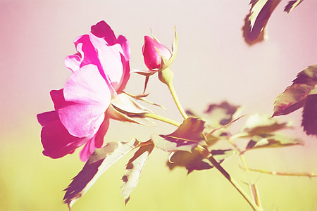 close up photography pink petaled flowers