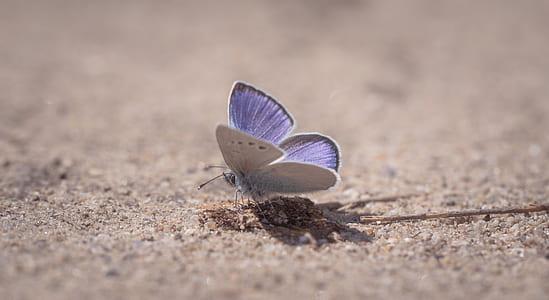 Purple Sulfur Moth On Ground Close-up Photography