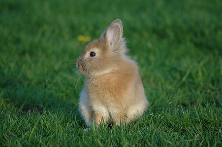 brown bunny on bed of green grass