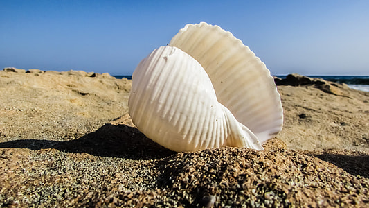 white conch shell on sand during daytime