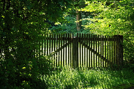 brown wooden gate under tall trees