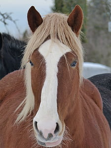 portrait photography of brown and white horse