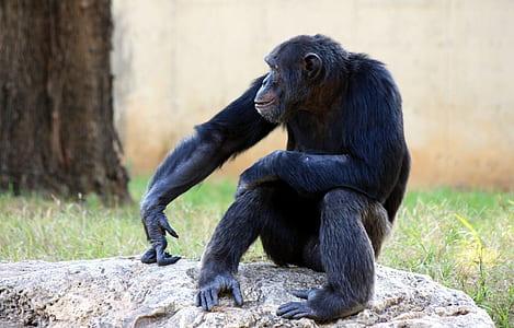 Wildlife photo of black monkey