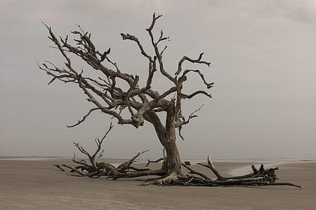 brown wooden tree