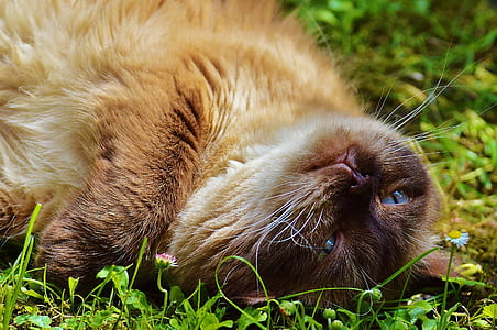 brown cat lying down on field