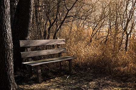 brown wooden bench on base of tree