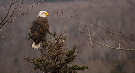 eagle perched on tree twig at daytime