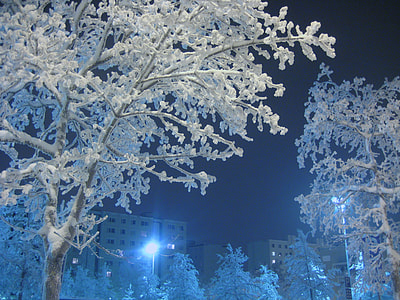 closeup photo of tree cover by snow