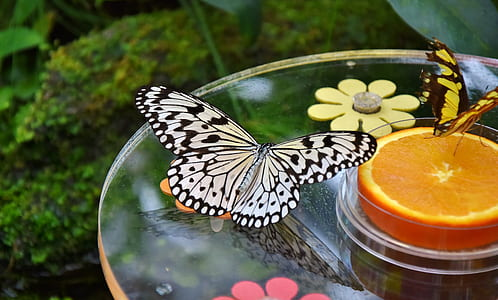 paper kite butterfly near sliced lemon fruit on table