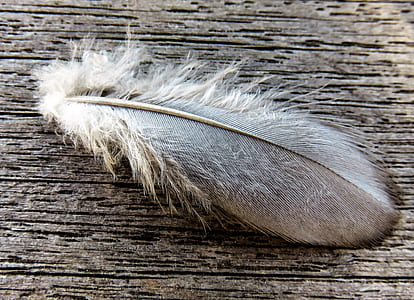 white and black feather on brown surface