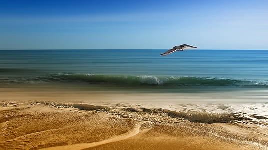 flying white bird over rippling body of water on shoreline