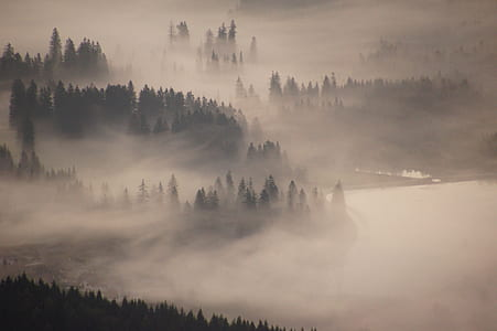 green leaf tree covered mountain with fog