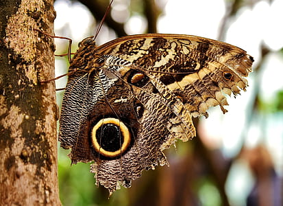 selective focus photo of owl butterfly