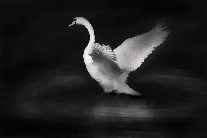 white swan figurine