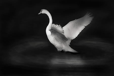 white swan figurine