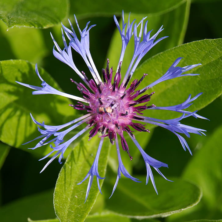 shallow focus photography of blue and purple flower during daytime