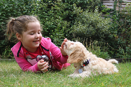 girl playing short-coated dog on grass
