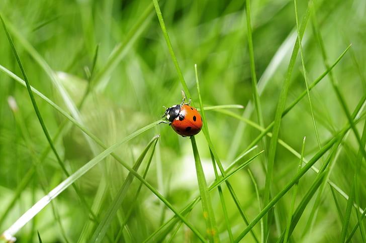 brown ladybug on green grass