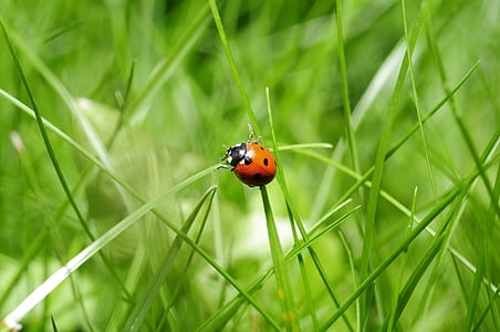 brown ladybug on green grass