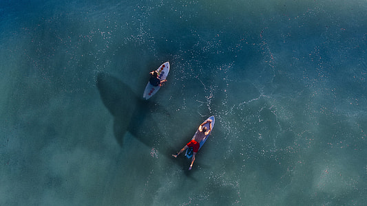 two man riding on personal watercraft with a shadow of a sea creature photo