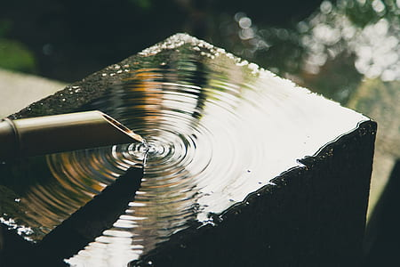shallow focus photography of water drop in bamboo stick
