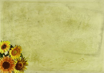 photo of yellow post card with sunflower