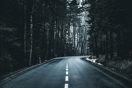 grayscale photo of road surrounded trees