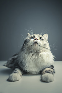 selective photograph of silver Tabby cat