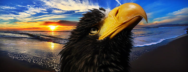 panoramic photo of bald eagle and seashore background