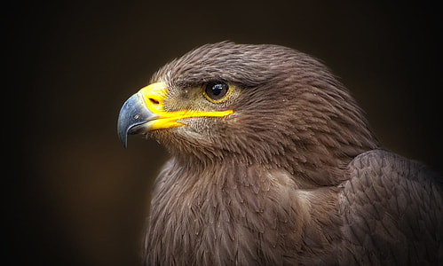 shallow focus photography of brown eagle