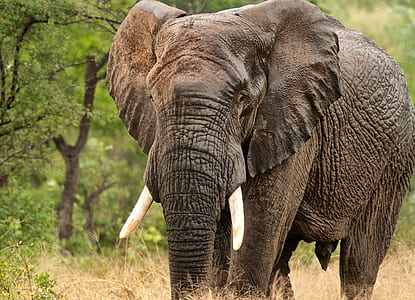 walking grey elephant beside trees during daytime