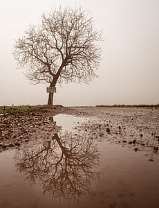landscape photograph of bare tree reflex through bodywater